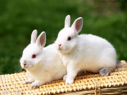 关于动物的口语交际