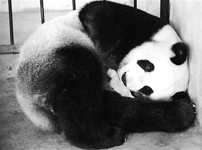 陕西省珍稀野生动物抢救饲养研究中心已经加强消毒