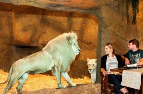 澳大利亚加马拉野生动物旅馆!