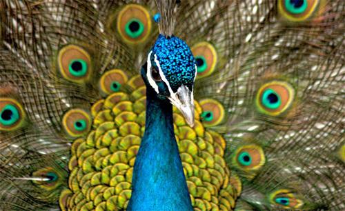 动物喻人的英语俗语, 你知道吗?