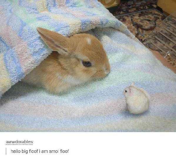 萌萌哒小动物要怎么描述?