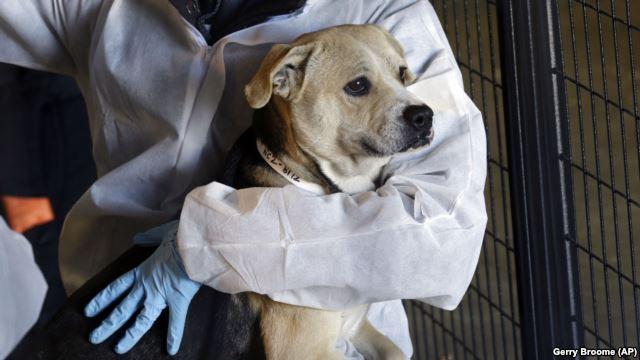 VOA慢速英语:近700只动物被从北卡罗来纳州收容所救出