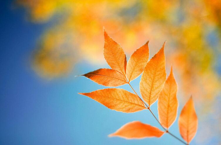 树叶盒子的折法步骤
