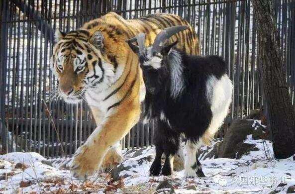 """动物界的""""跨种群友情"""""""
