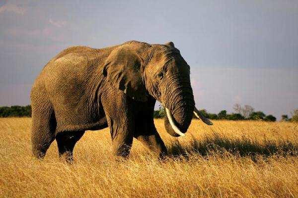 """资本市场上的""""大象交易"""""""