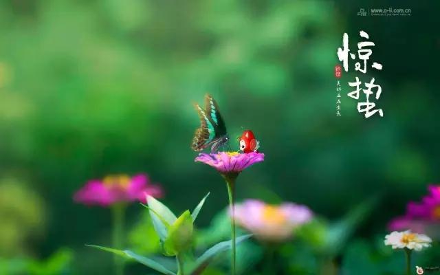春来夏往,秋去冬来。节气的英文表达奉献给大家。