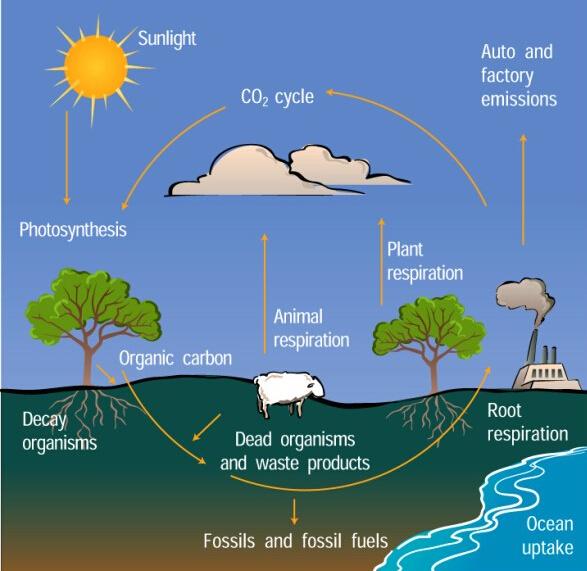 雅思写作小作文流程图考官范文:自然界的碳循环