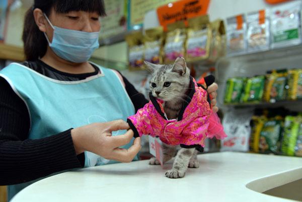 """猫经济兴起 今天你""""吸猫""""了吗?"""