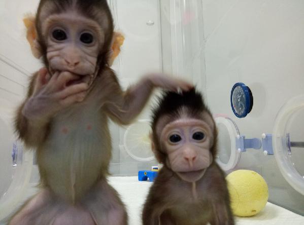 世界首个体细胞克隆猴在中国诞生