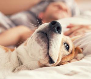 与狗同眠,狗好你也好