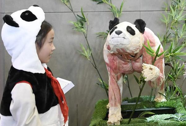 全球首只塑化大熊猫亮相成都