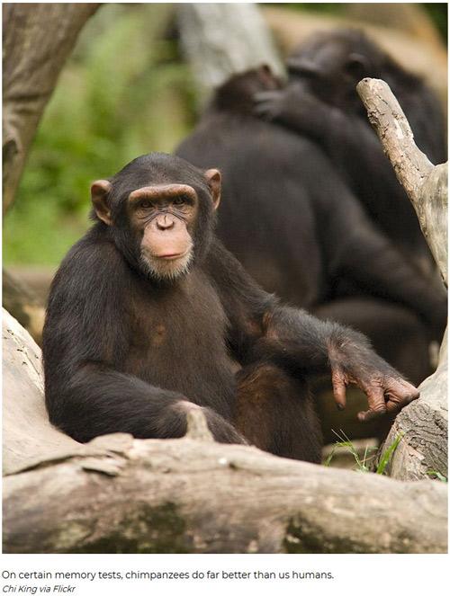 盘点:世界上最聪明的动物们
