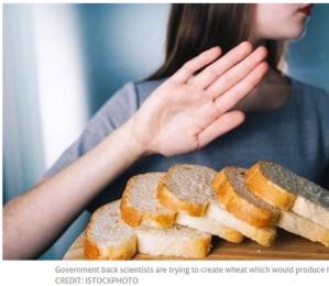 """科学家十年内将生产出""""健康""""白面包 吃一点就饱"""