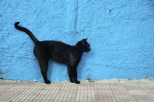 为什么黑猫预示着厄运?