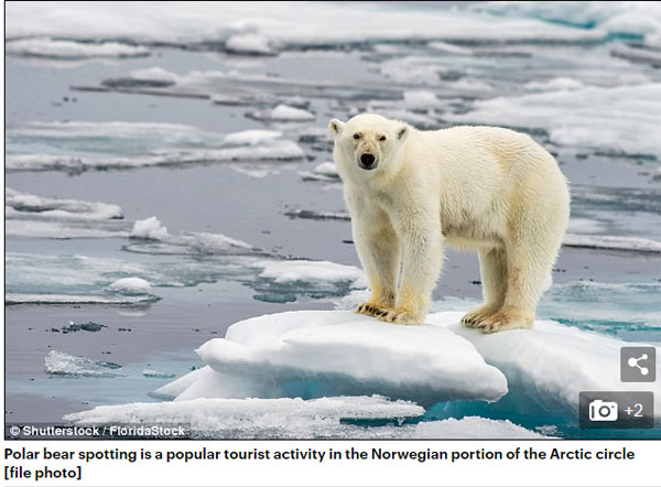 北极圈难逃热浪袭击  北极熊或将灭绝?