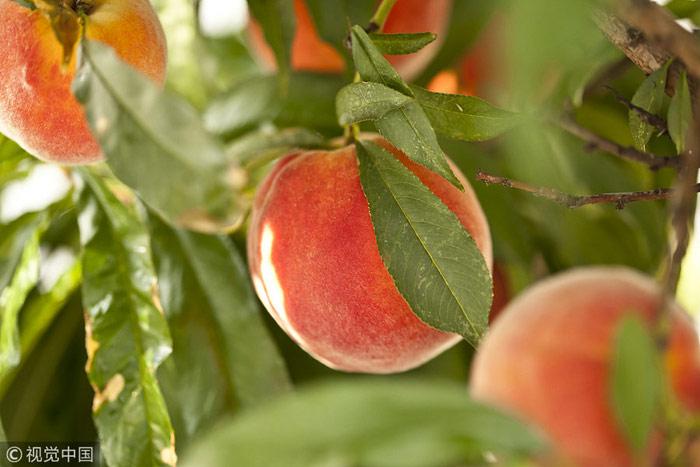 吃桃、摸秋……立秋习俗知多少