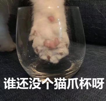 """一面市就售罄,刷屏的""""猫爪杯""""你抢到了吗?"""