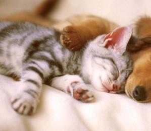 养狗和养猫,哪家主人更幸福?科学家这样回答