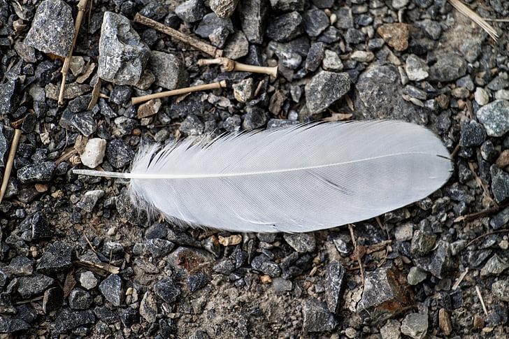 先有羽毛,后有鸟!