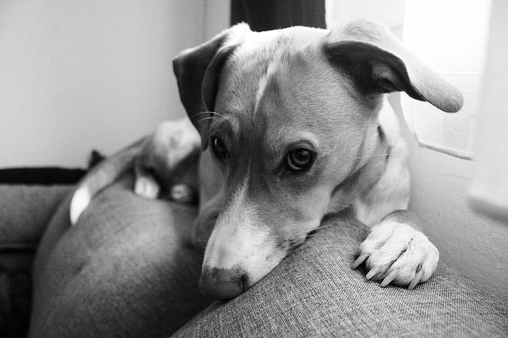 狗能反映主人的压力水平