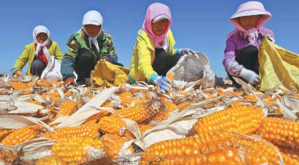 每日一词∣粮食安全 food security