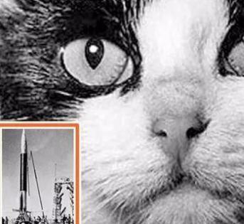 10月18日,纪念第一只进入太空的猫