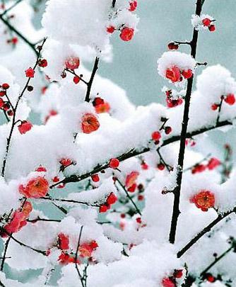 CCTV9英语新闻2010年12月:重庆冬至汉服活动